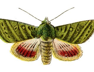 Vintage Graphics – Colorful Moths or Butterflies