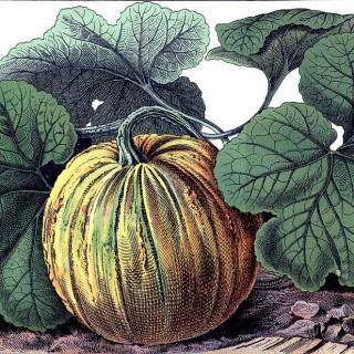 Botanical Vintage Pumpkin