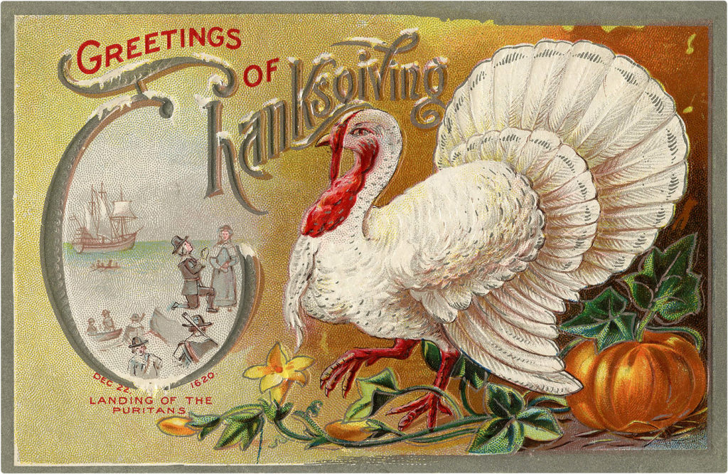 White Turkey Vintage Postcard