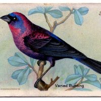 Vintage Graphic - Pretty Bird Advertising Card