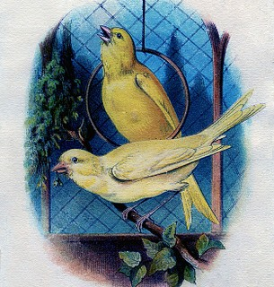 Vintage Graphic – 2 Canary Birds in a Cage