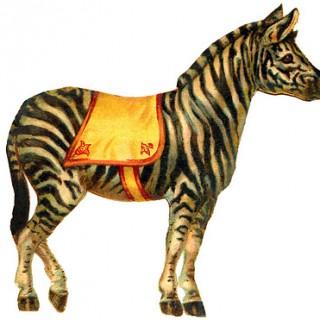 Vintage Graphic - Circus Zebra