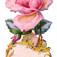 pink+rose+antique++Image+GraphicsFairy006c