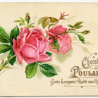 Vintage Graphic - French Roses