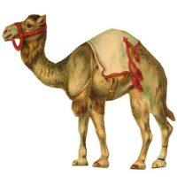 Camel, Vintage, Graphic