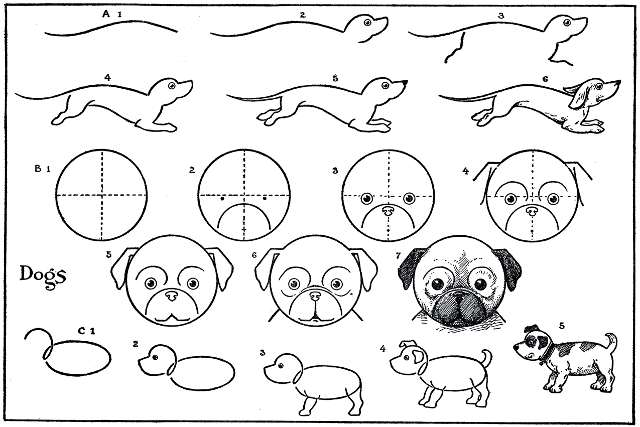 Kids Printable     Draw Some Dogs     Pug     DachshundHow To Draw Cute Animals Step By Step For Kids