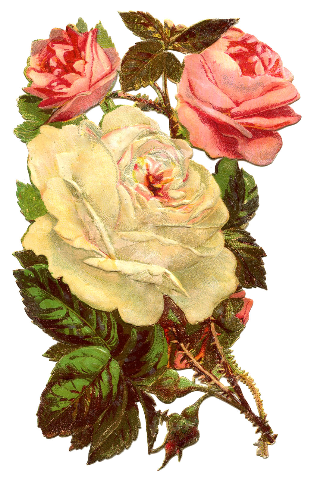Antique Graphic - Pink and White Roses - The Graphics Fairy