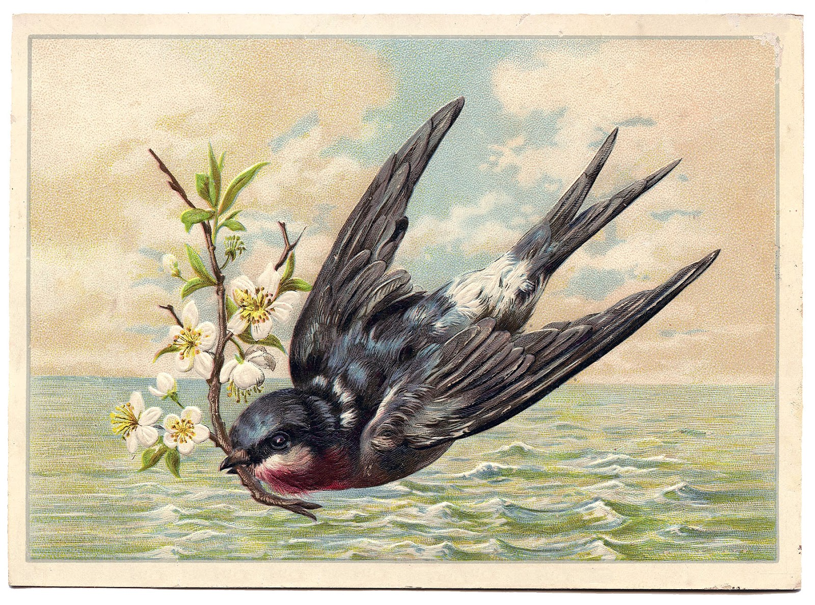 Antique Image - Swallow flying across The Sea - The ...