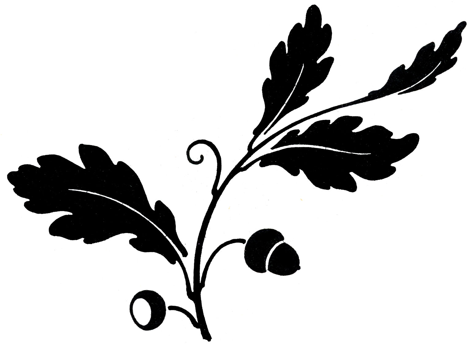 Oak Leaves Silhouette with Acorns