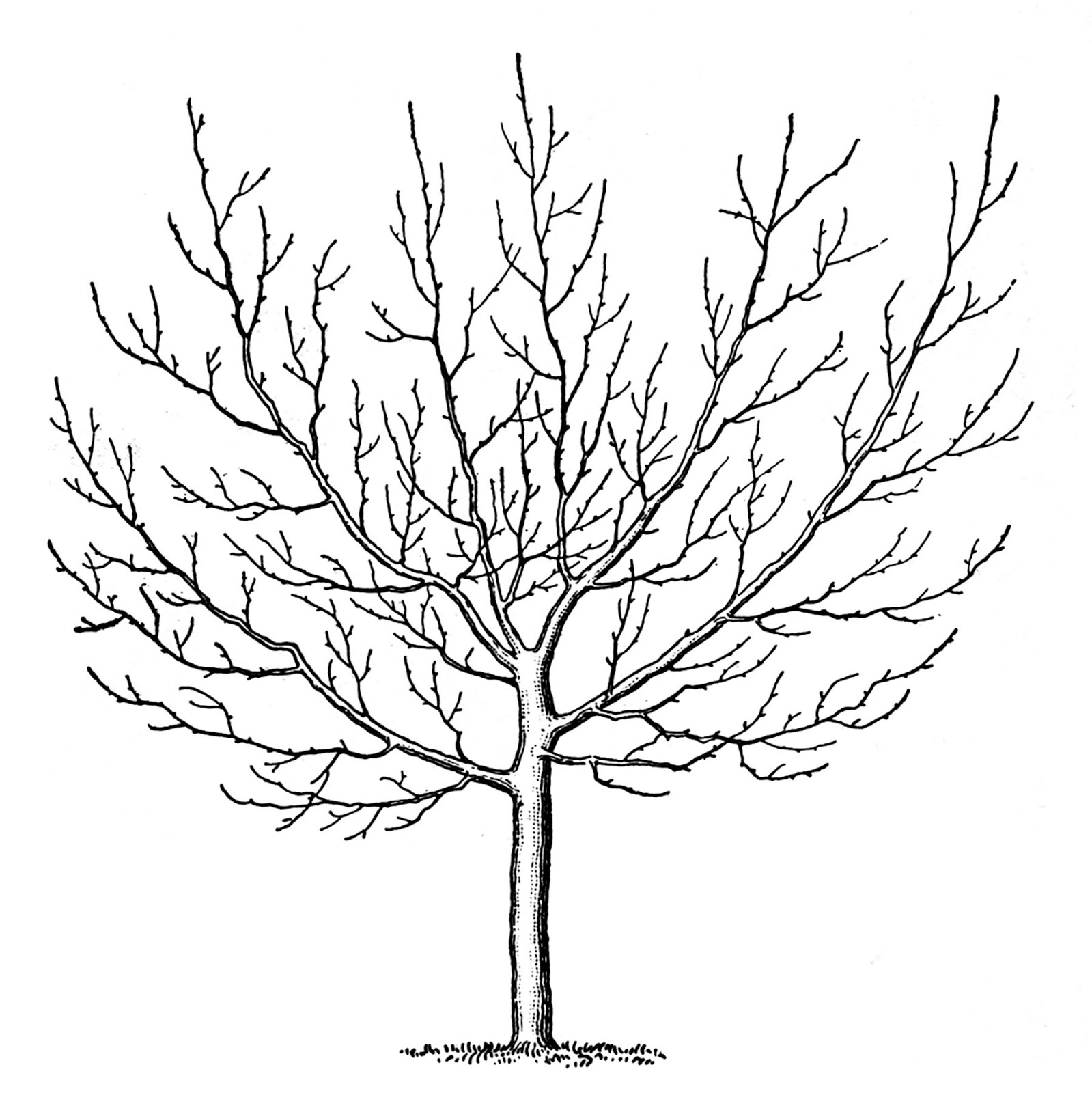 Winter Tree Branch Clip Art