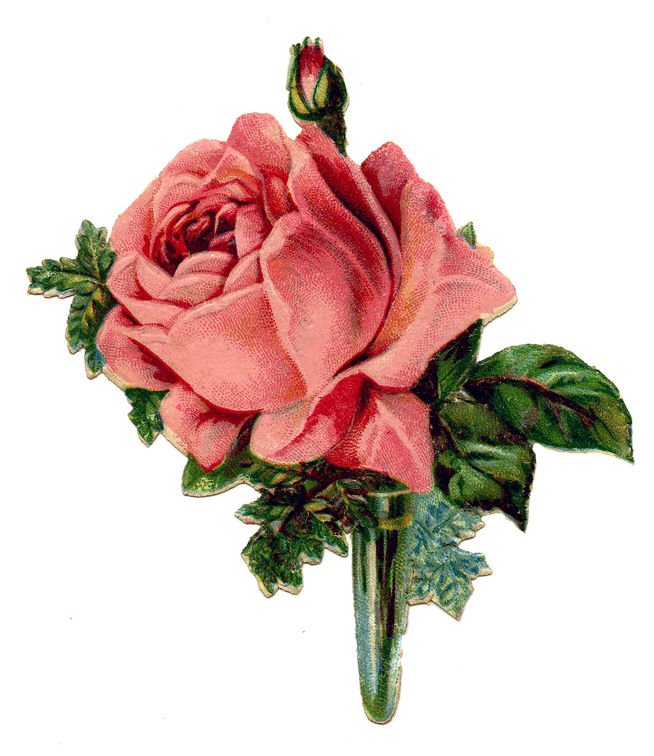 Vintage Graphic - Pink Rose Boutonniere - The Graphics Fairy