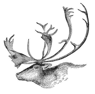 Vintage Caribou