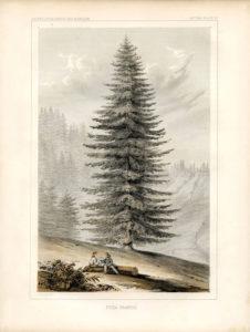 Giant Christmas Tree Printable