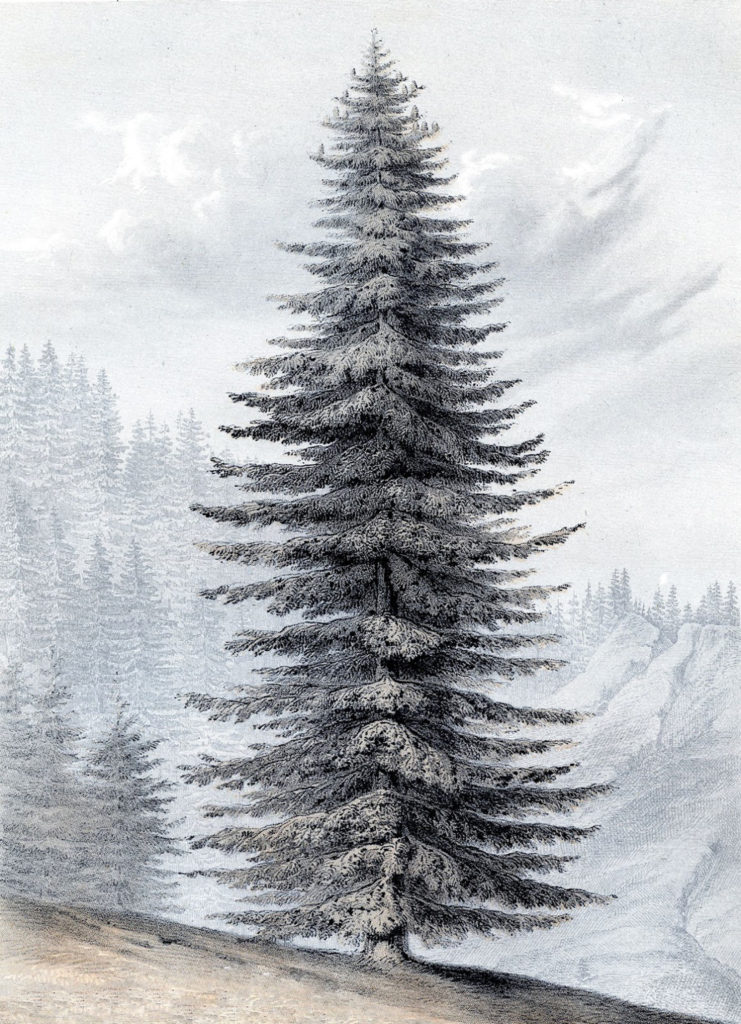 Giant Christmas Tree Printable Art