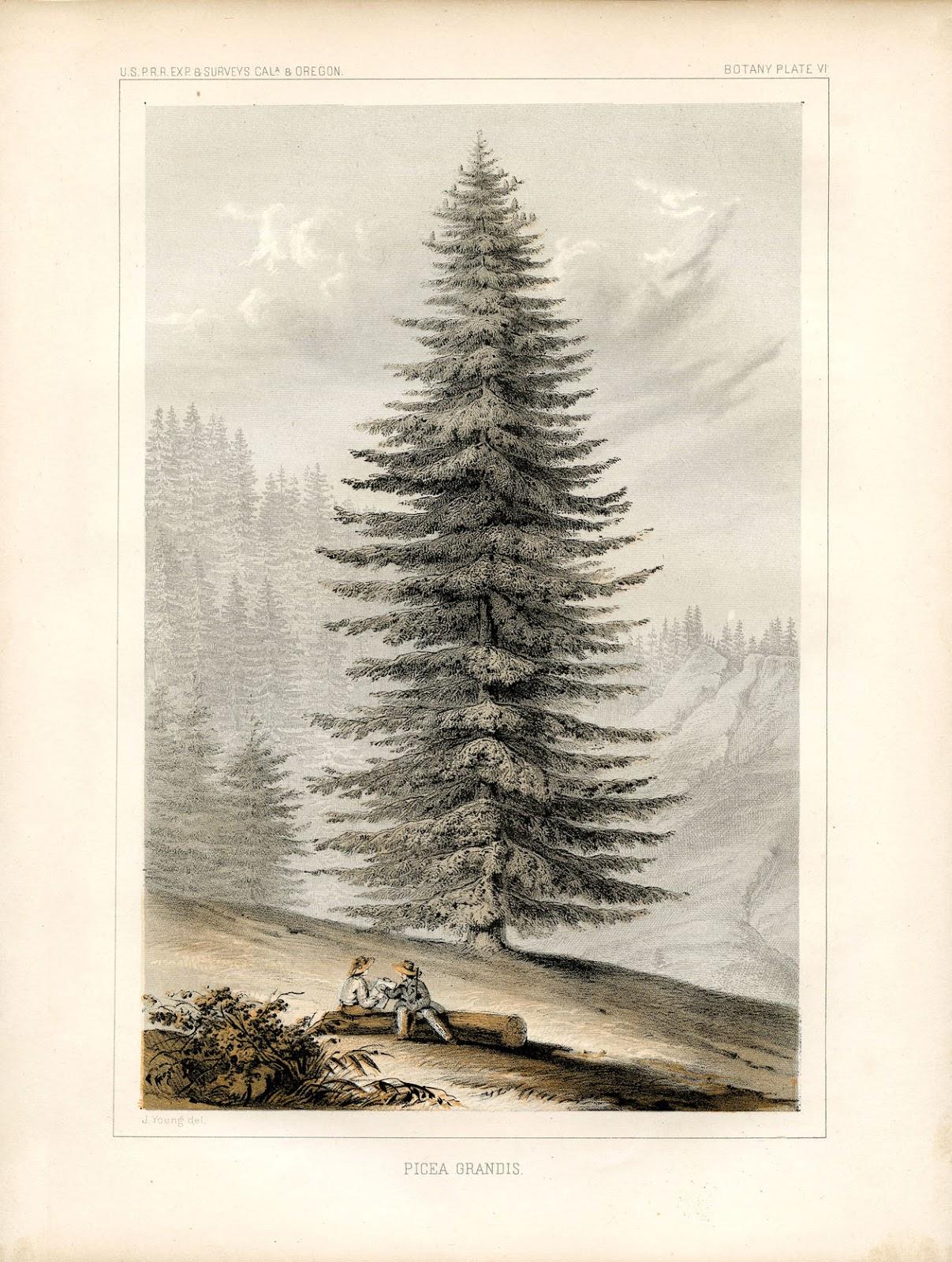 instant art printable glorious giant christmas tree botanical