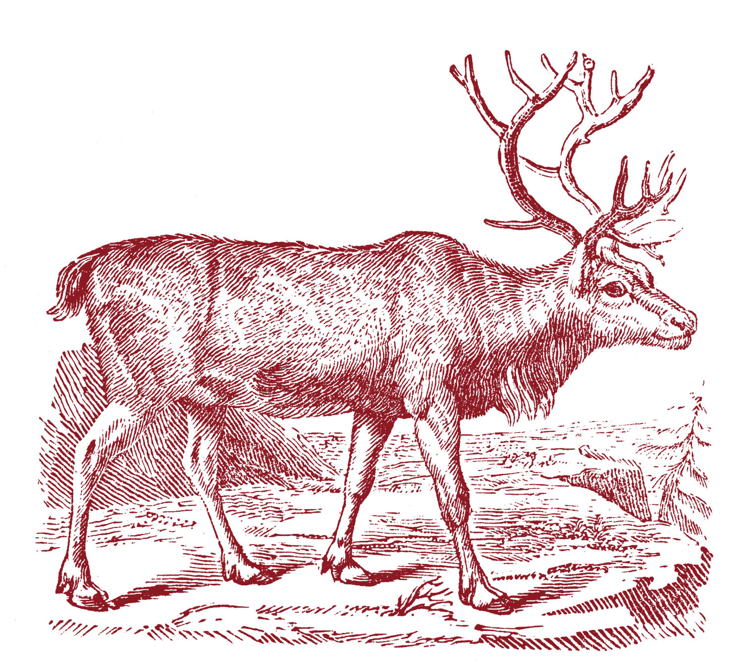 Christmas Images - Beautiful Reindeer - The Graphics Fairy