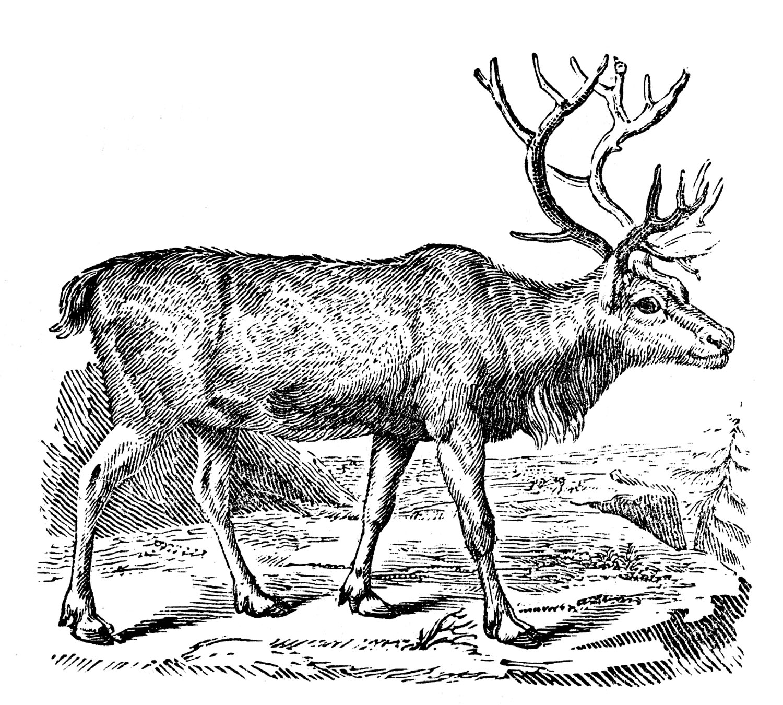 Reindeer Vintage Large Antlers Black