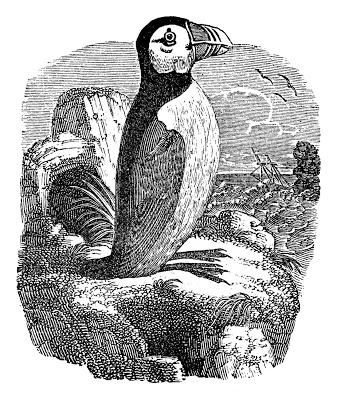 Vintage Bird Graphics Puffin