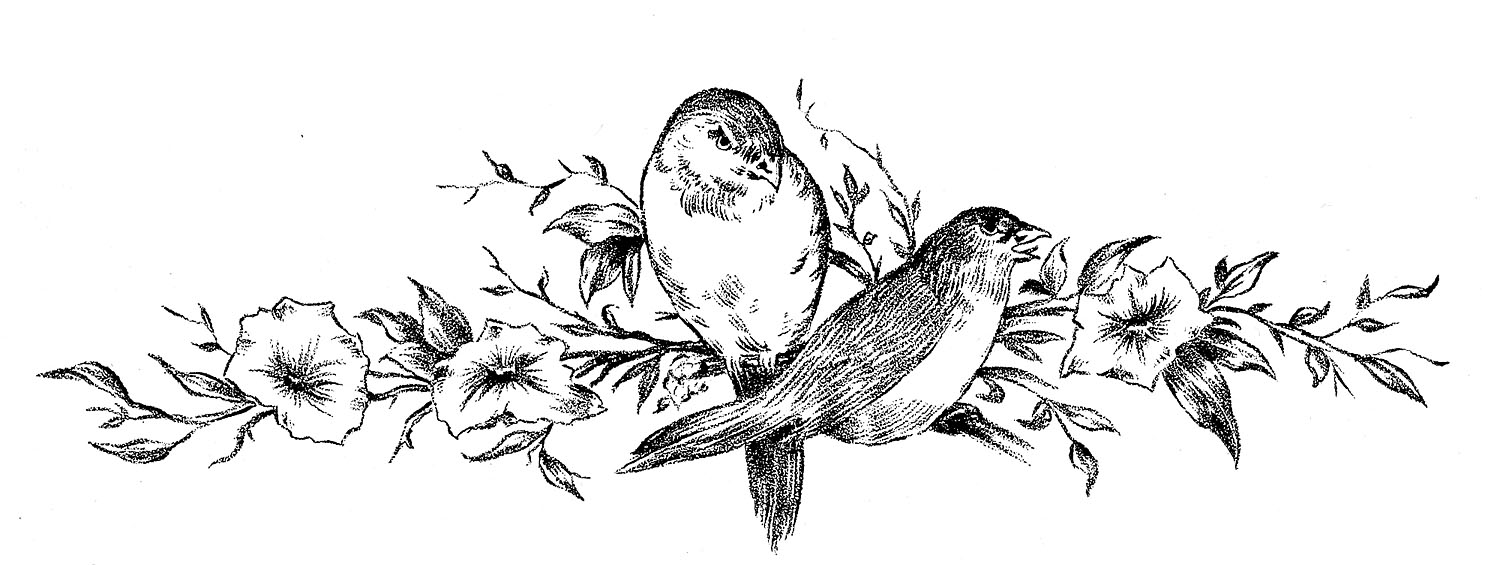 Pretty Bird Drawing These Are Some Pretty Vintage