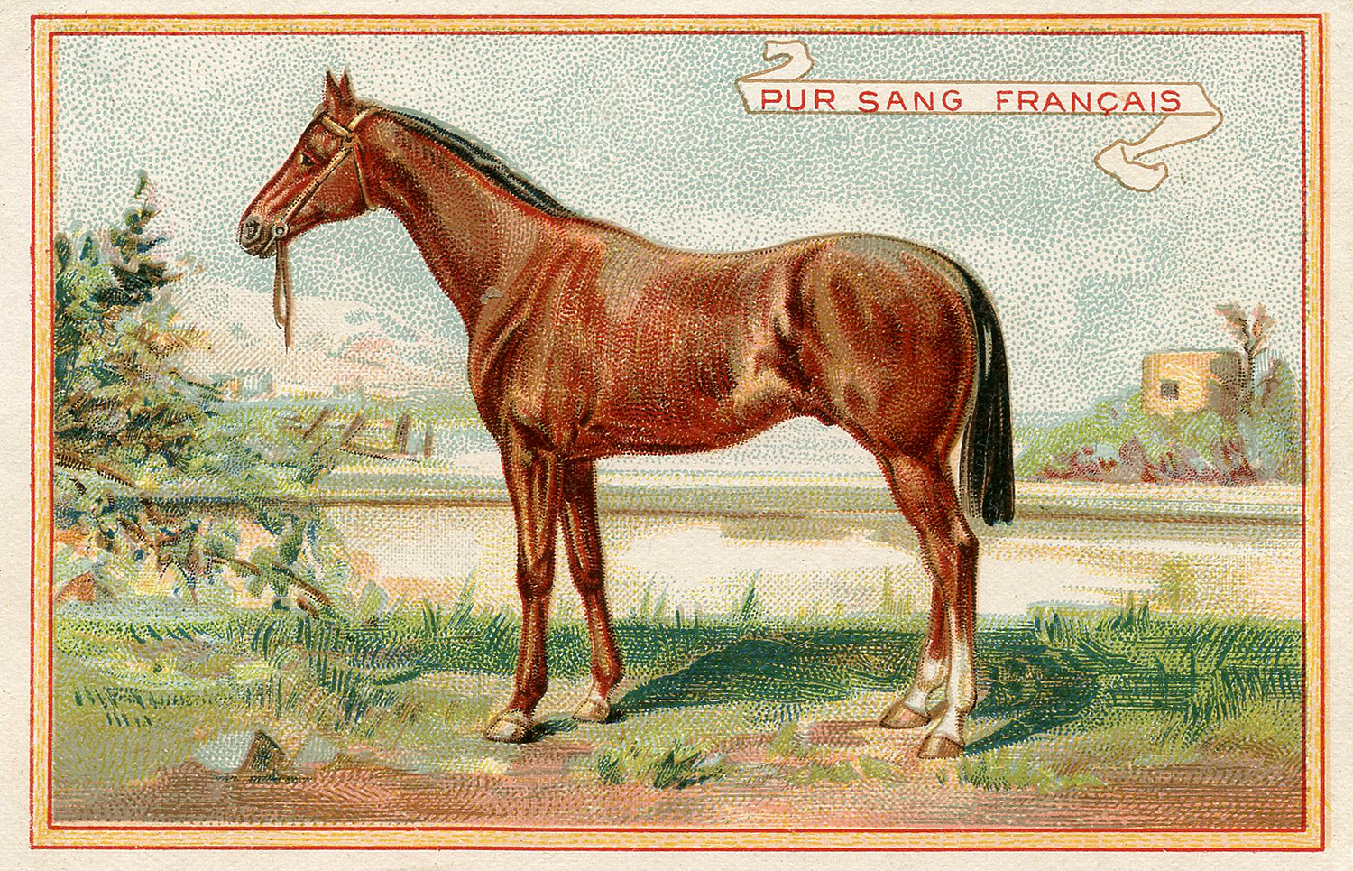 Vintage Graphic Beautiful Brown Horse The Graphics Fairy