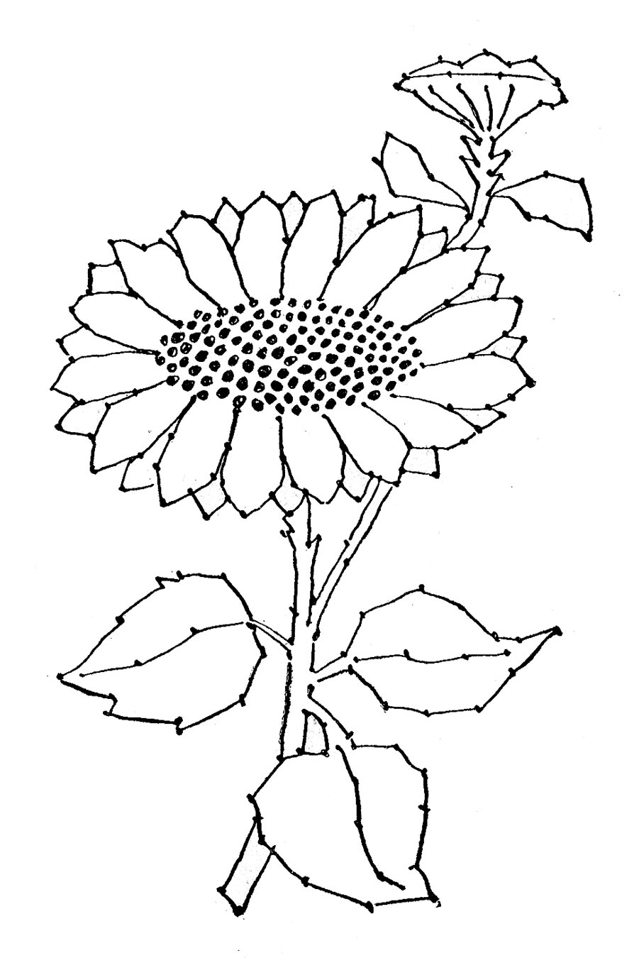 Embroidery Pattern Sunflower Line Art