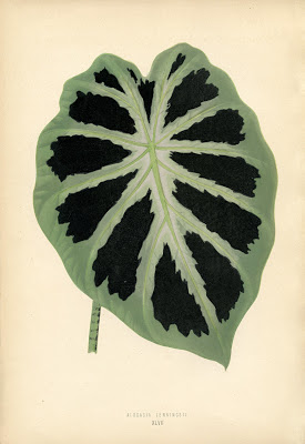 Vintage Printable Botanical Leaf