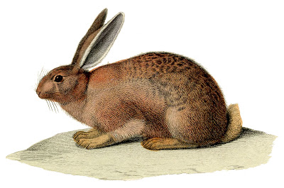 Vintage Stock Image Brown Rabbit Bunny Easter