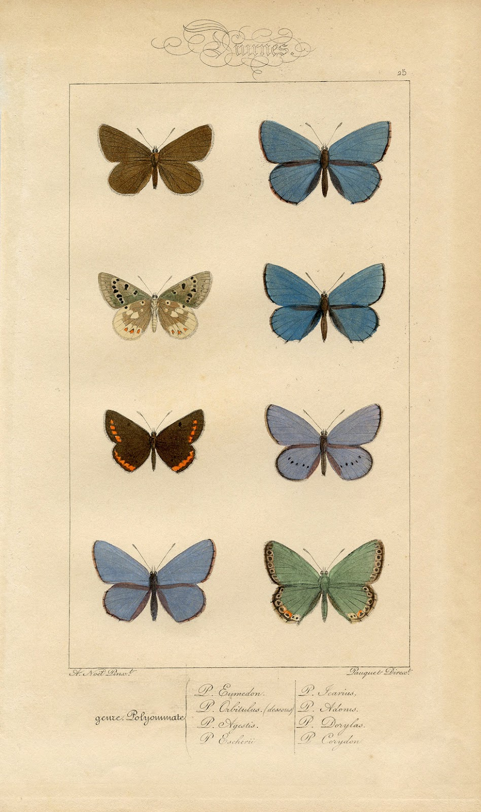 Butterfly Printable Moths Vintage Prints Royalty Free French