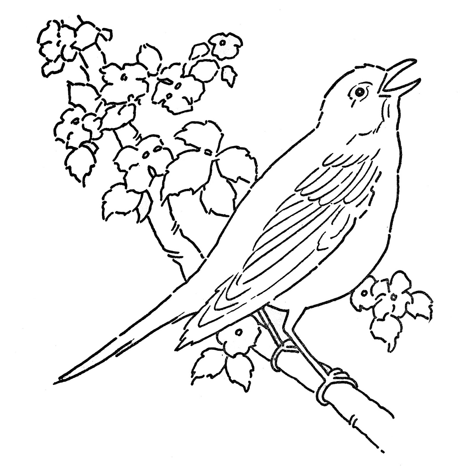 Line Art - Coloring Page - Bird with Blossoms - The Graphics Fairy
