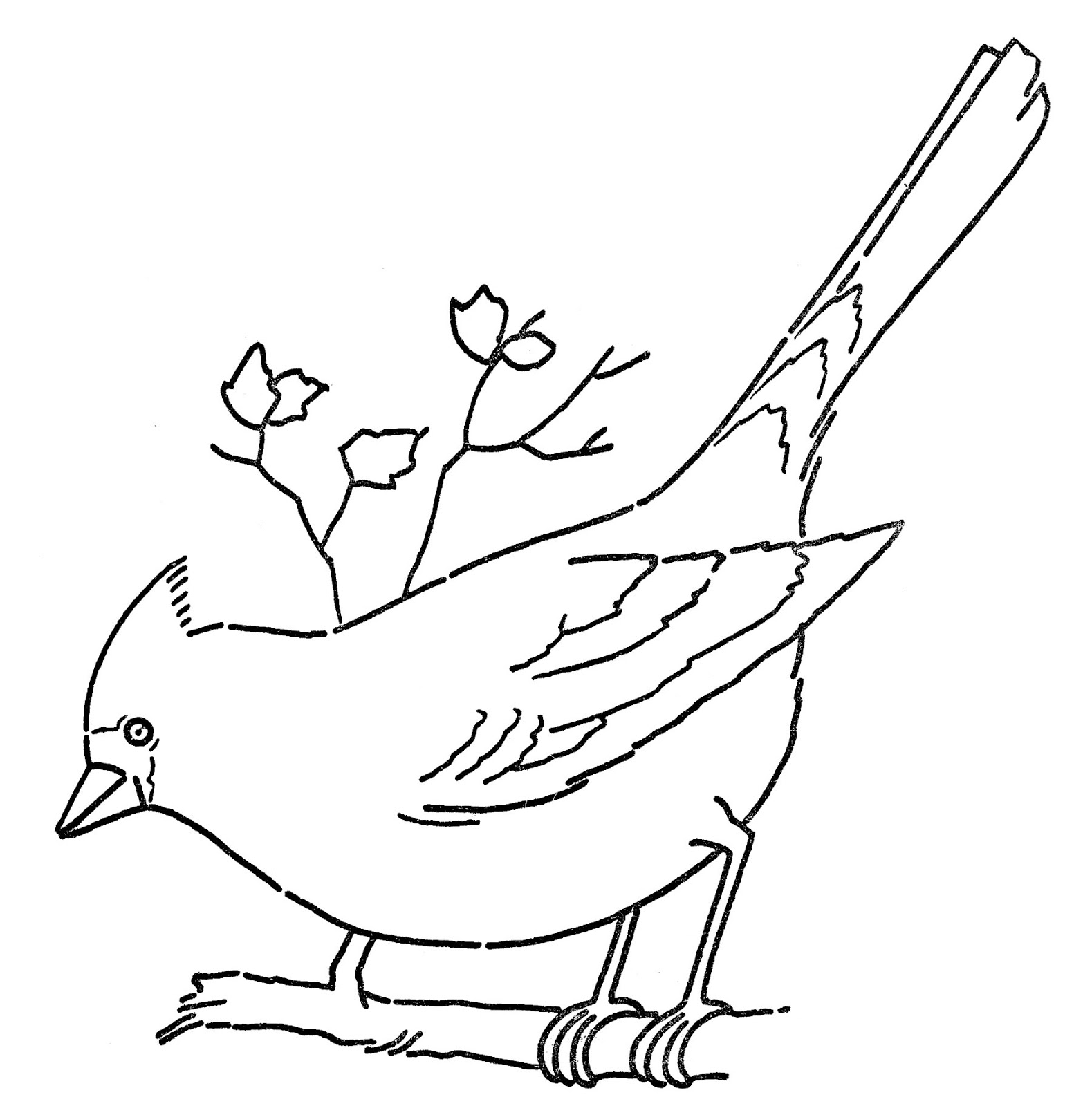 Simple Bird Line Art : Line art coloring page cardinal on branch the