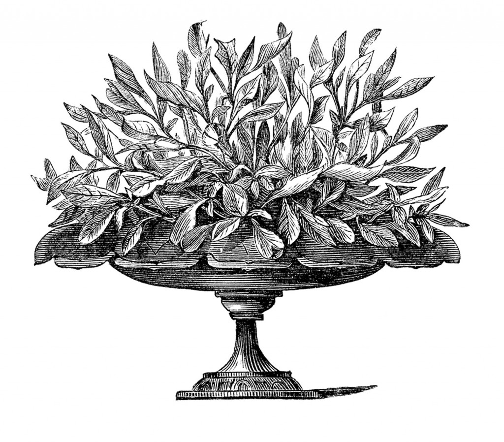 House Plant Images - Victorian