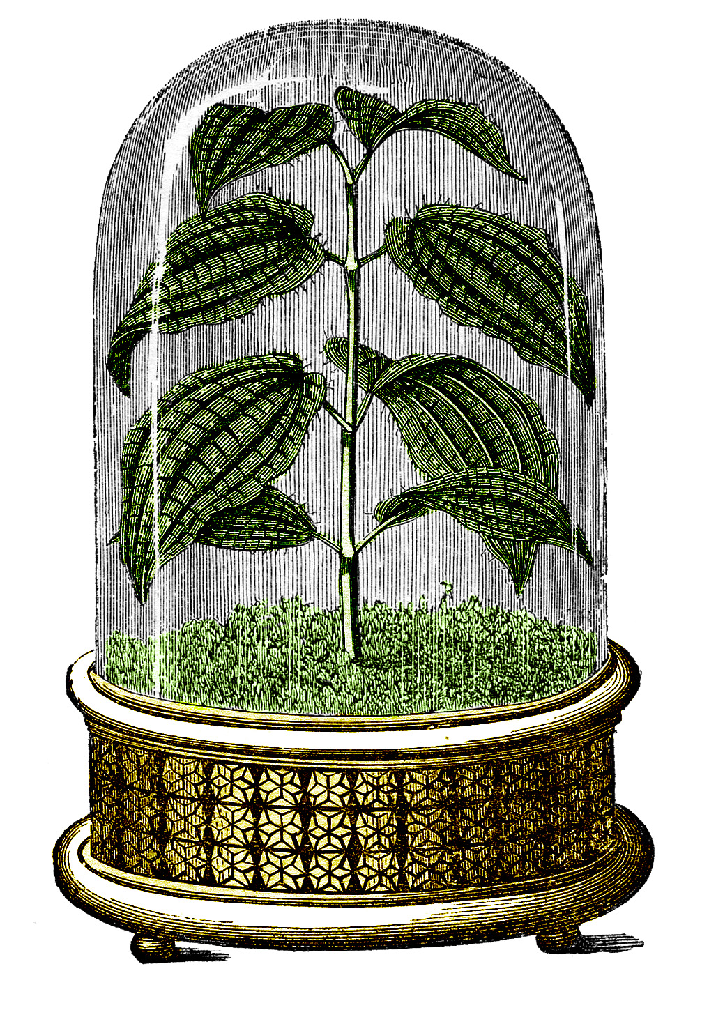 Vintage Cloche Image with Plant
