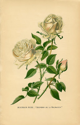 Vintage Printable  White Roses Botanical