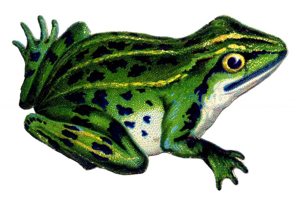 Vintage Frog Image