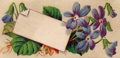 Vintage Graphic - Violets Calling Card