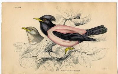 Gorgeous Birds – 1830's Ephemera Image