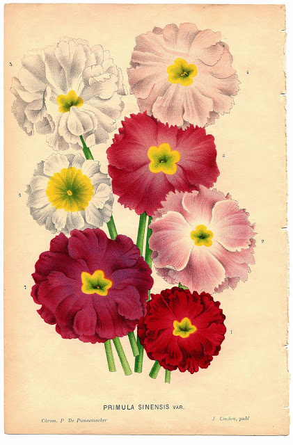 Antique Botanical Ephemera Image – Flowers