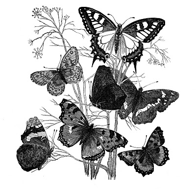 Antique Image – Butterflies on Branch