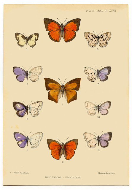 Instant Printable Art – Antique Butterfly