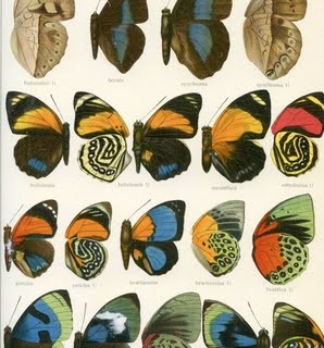 Free Vintage Clip Art – Butterfly Wings Galore