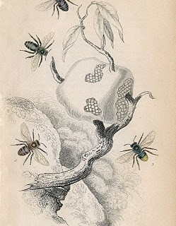 Antique Bee Print – Image Download