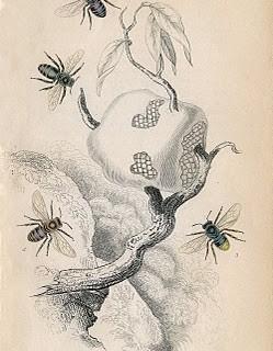 Antique Bee Print – Image Download