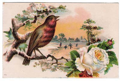 free vintage graphic   beautiful bird with white rose