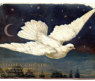 Vintage Clip Art – Superb Dove with Moon & Stars