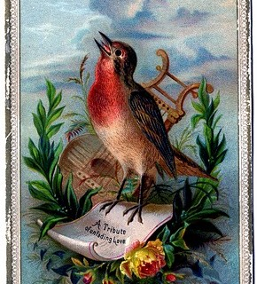 Vintage Clip Art – Amazing Bird Card – Robin