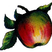 Apple Image from Game
