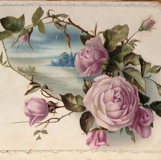 Victorian Graphic – Pink Cabbage Roses