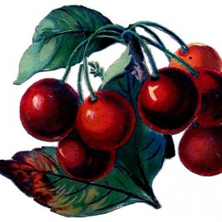 Vintage Clip Art – Cherry Bunch