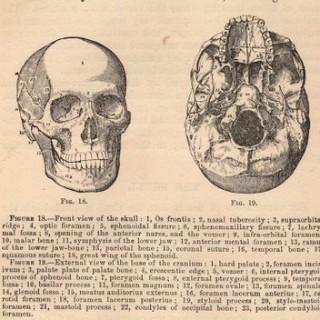 Vintage Graphic – Anatomy – Skull Diagram