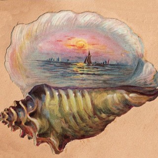 Free Graphic – Vintage Seashell